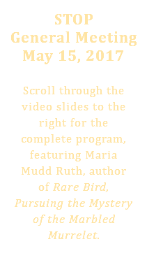 STOP General Meeting May 15, 2017 Scroll through the video slides to the right for the complete program, featuring Maria Mudd Ruth, author of Rare Bird, Pursuing the Mystery of the Marbled Murrelet.